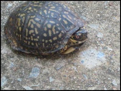 turtle 3_thumb[2]