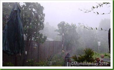 garden in a storm
