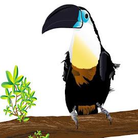 Toucan by Staci Ferrara - Illustration Animals ( bird, illustrator, illustration, toucan, tropical bird )