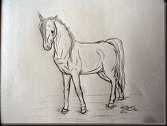 Horse008