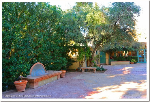 131203_TucsonBotanicalGarden_006