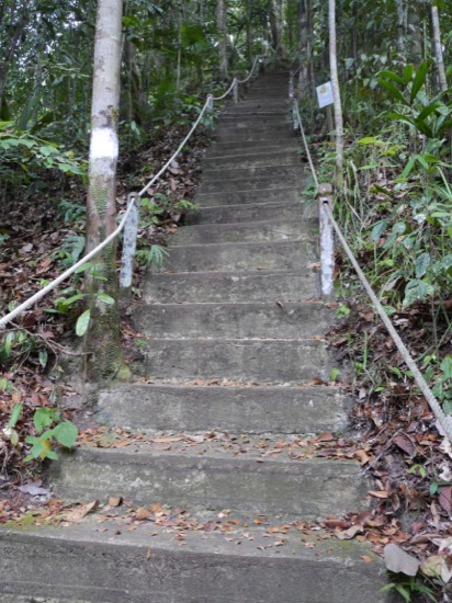 These very steep stone steps lead up to the tree tower and other trails in the park, including the summit Bt. Lambir (465 m)