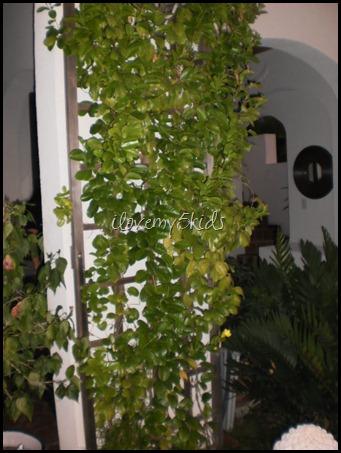 Tropical Climbing Vine