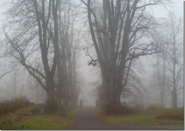 Florestas sombrias (16)