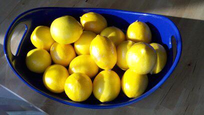 Meyer Lemons Still Life