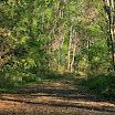 Fall at Arnold Arboretum