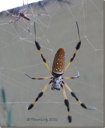07-17-spider