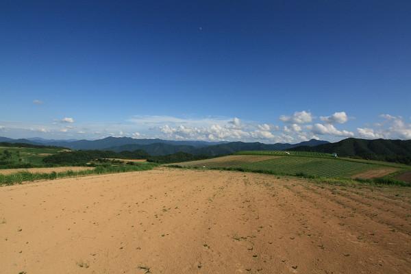 杉ヶ沢高原の大根畑