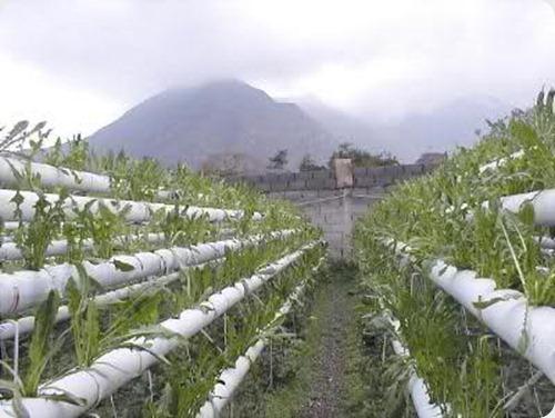cultivos hidroponicos1