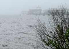 Fog Rolls in At Pelican Point