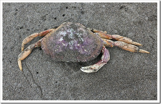 110712_crab_on_beach