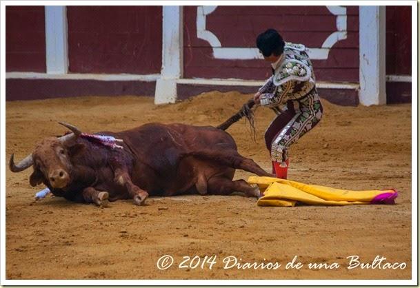 Toros 2014 (2)-33