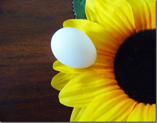 egg 001