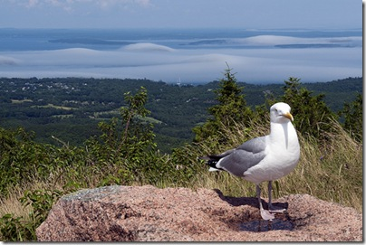 Animals in Acadia National Park
