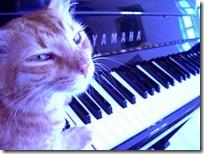 gato pianista blogdeimagenes (4)