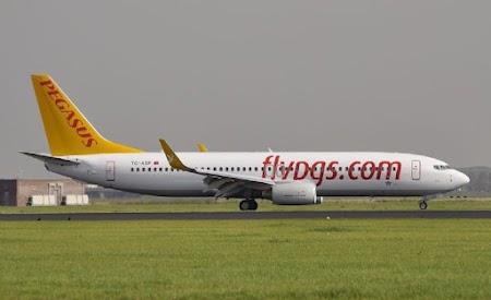Fly Pegasus.jpg