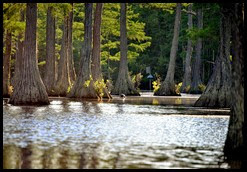 08d - Paddling amongst the Cypress Trees - time to turn around