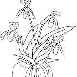 orchidee9.jpg