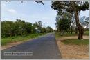 _P6A2048_road_mudumalai_bandipur_sanctuary