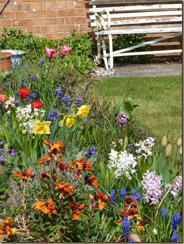 garden colours 006