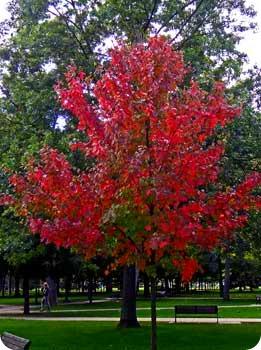 30-fall-tree