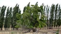 Die Bäume biegen sich im Wind