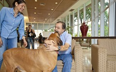 cão hospital