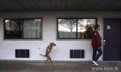 Cão chamado Faith FÉ2