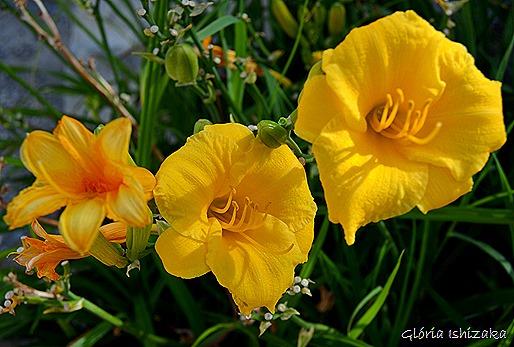 Glória Ishizaka - Flor amarela 29