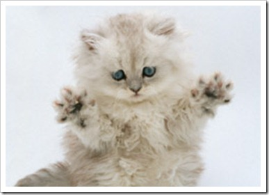 jazz-hands-kitten