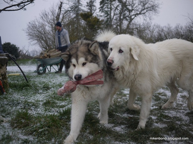 Munson  & Legend play in snow (3)