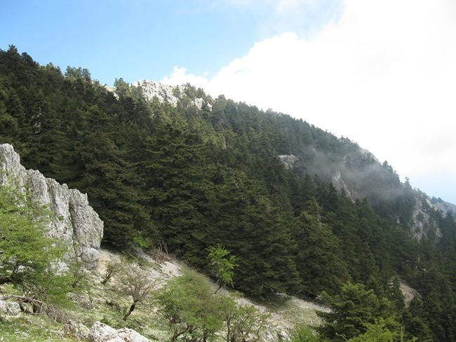 Πεζοπορία στο μονοπάτι Χιονίστρα – Μέγας Σωρός – Κρουκουμπιά (16.6.2013)
