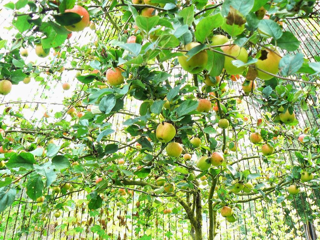 (38)jardin-chateau-fougeres-sur-bievre©CDT41lrothon