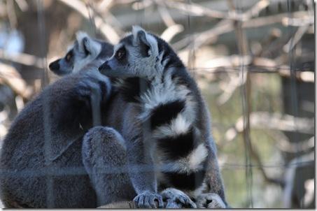 07-11-11 zoo 38