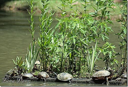 EJC_Floatingbed_Turtles2