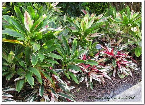 11-20-foliage2