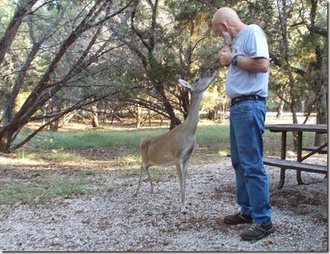 Deer visit 013