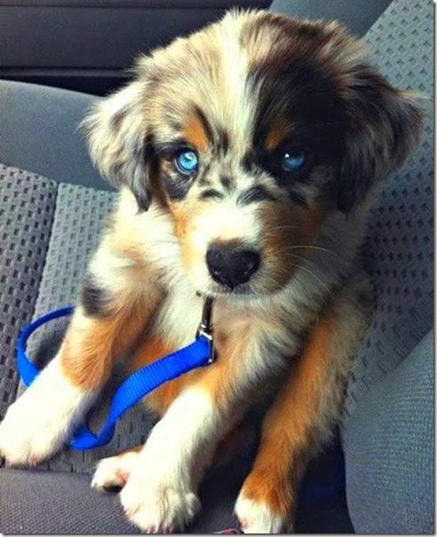 strange-dog-cross-breeds-023