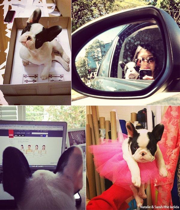 Natalie and Sarah - Delilah French Bulldog