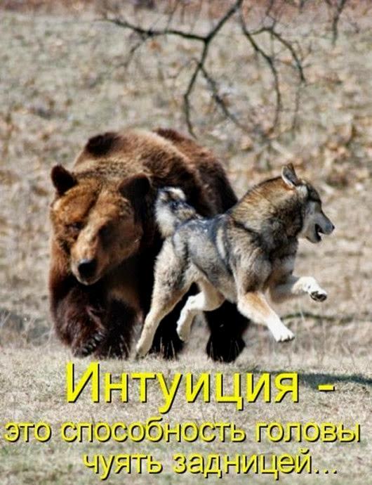 1246349713_jivotnie_26