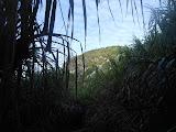 Nearing the crater area of Gunung Ambang (Dan Quinn, February 2013)