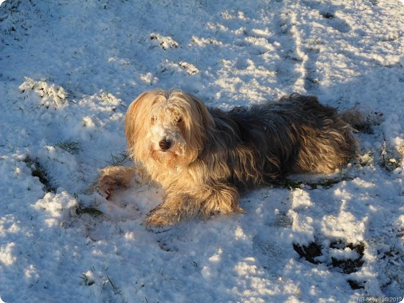 SAM_0007 Snowy Ellesmere
