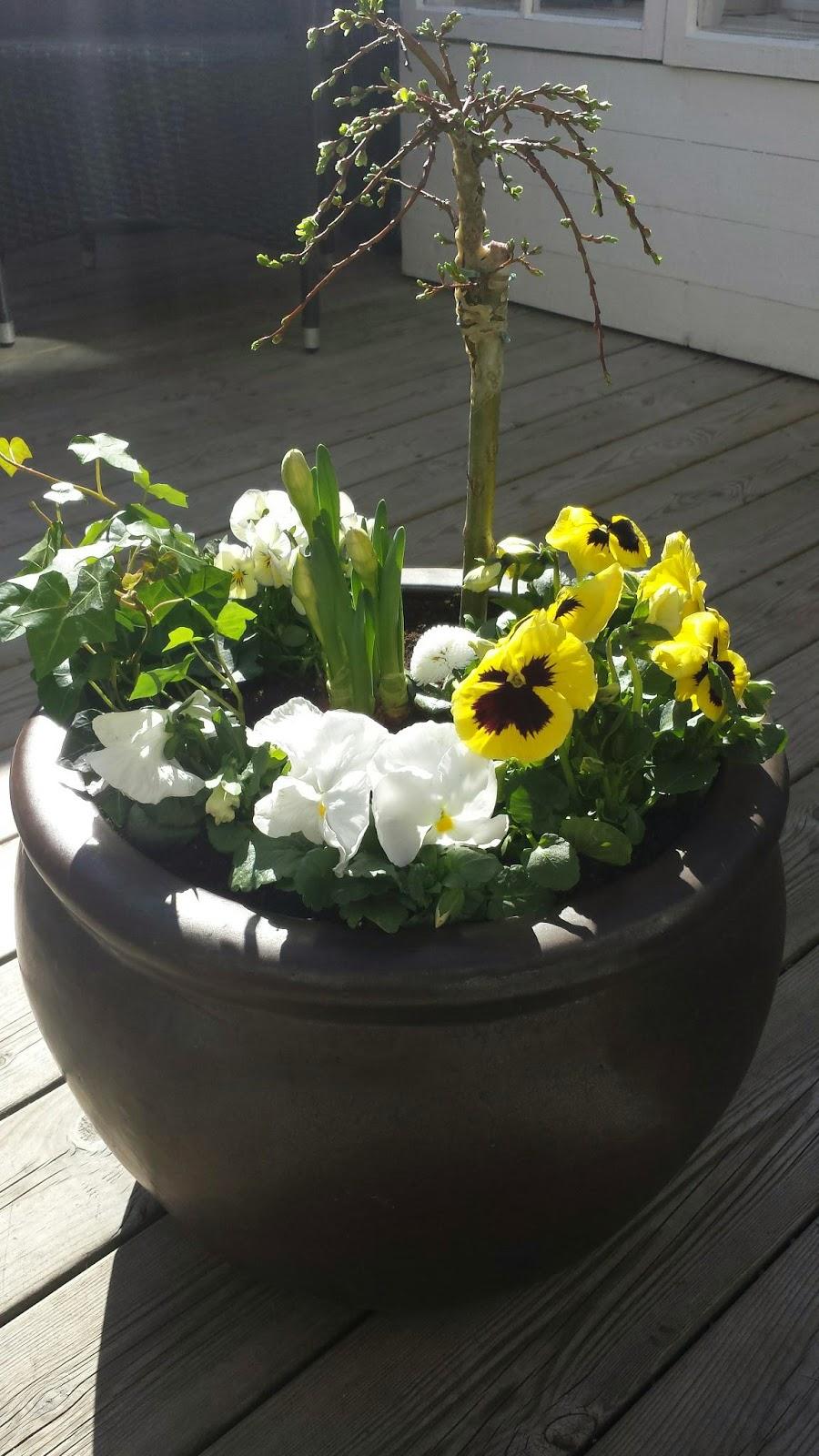 Dorinas blommor : vacker plantering med hängvide