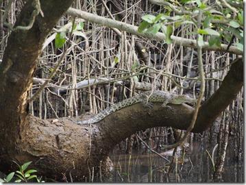 2 Croc v V.vi[8]