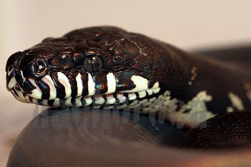 Dive into python pdf ebook markmetr - Dive into python ...