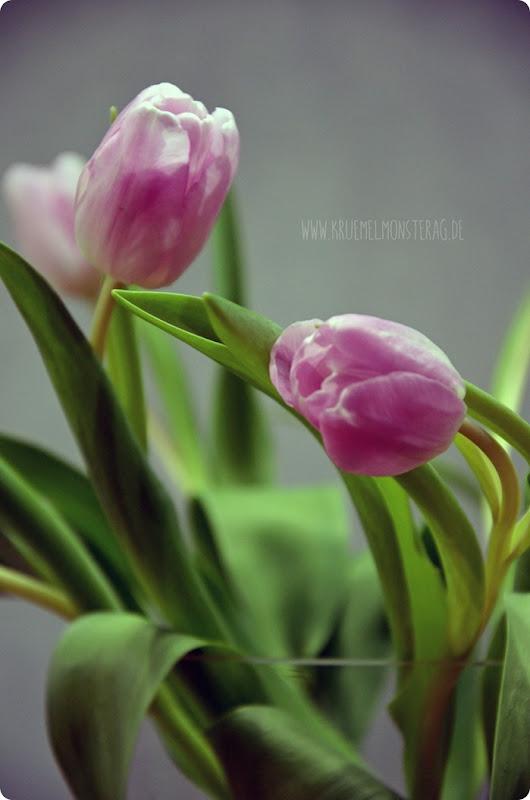 zartrosa Tulpen (03) am BlickDienstag
