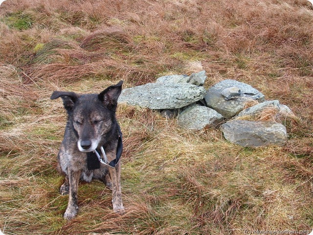bruno unimpressed by cockup cairn