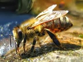 Amazing Pictures of Animals, Photo, Nature, Incredibel, Funny, Zoo, Bee, Insetcs, Anthophila, Alex (20)