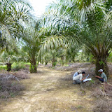 小農アブラヤシ畑の土地利用履歴を聞く / Ask about smallholders'  land use history for oilpalm production