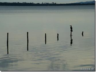 110626 Lago de Peten Itza (7)
